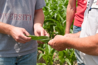 Agronomy_Looking at plant-2